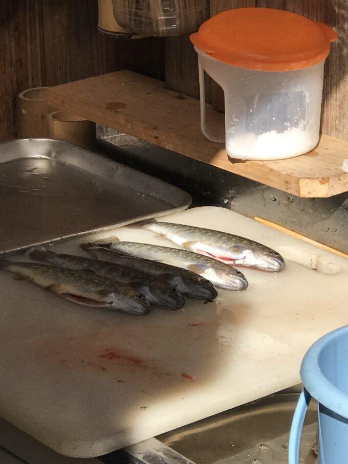大正池渓流魚センター